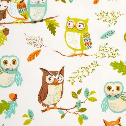 Owls Nature