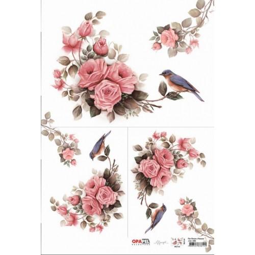Opapel Rosas e Pássaro
